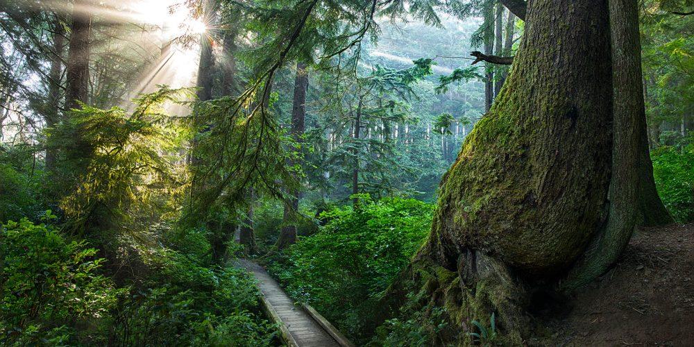 Second Beach Rainforest Olympic National Park